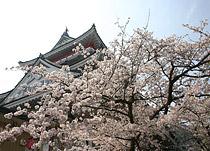 熱海城桜まつりイメージ