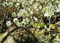 熱海梅園梅祭りイメージ
