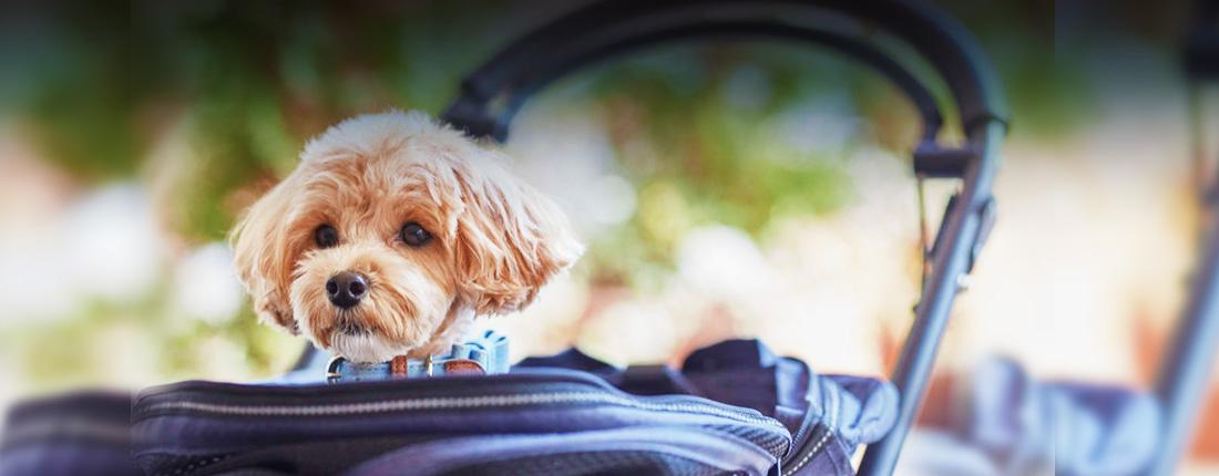 愛犬と過ごす